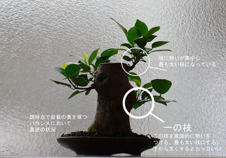 gajyumaru-tyoe-a-20190904-01.jpg