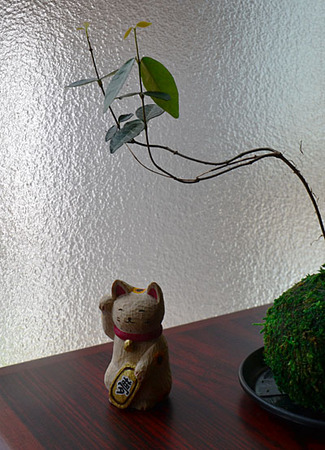 keikousha-with-bonsai01.jpg