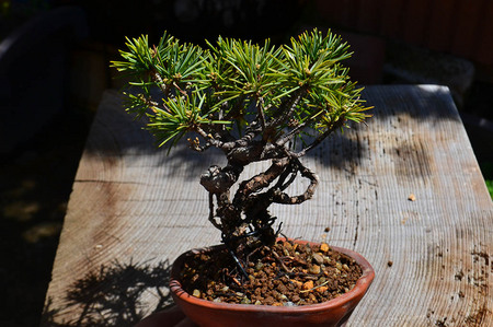 mogu-bonsai-20190413-19.jpg