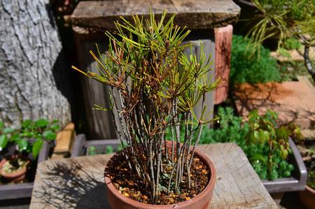 mogumogu-bonsai-2019-0502-02.jpg