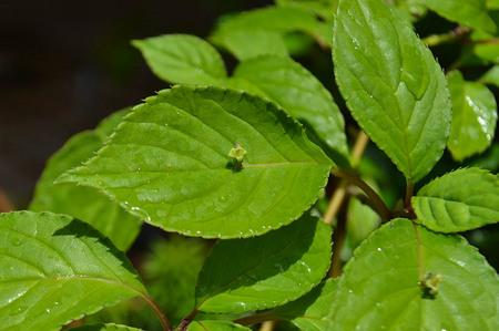 mogumogu-bonsai-yajimaseihouen.jpg