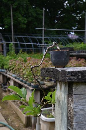 mogumogu-tsurumofoki01.jpg