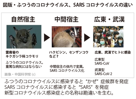 sars-fig-001.jpg